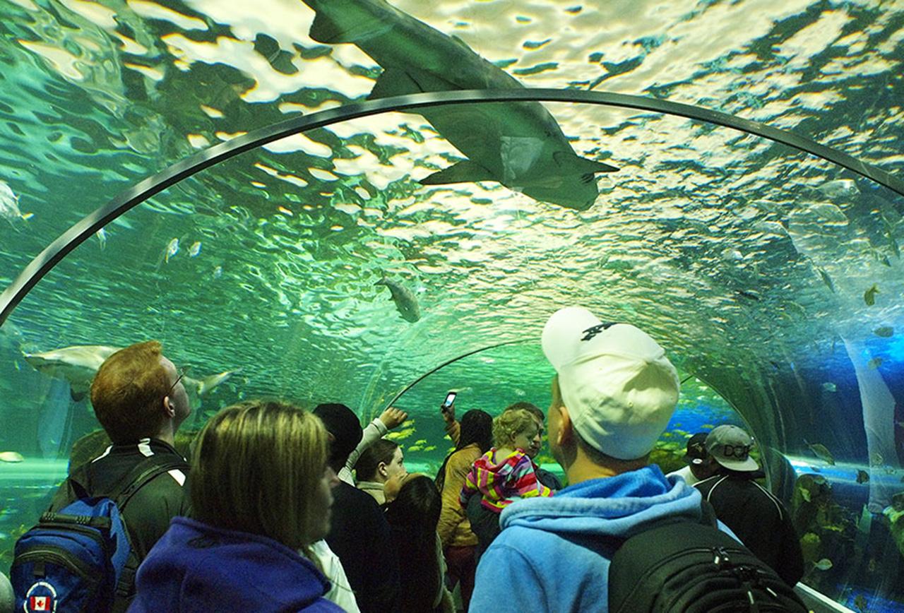 All Glass Aquarium Canada