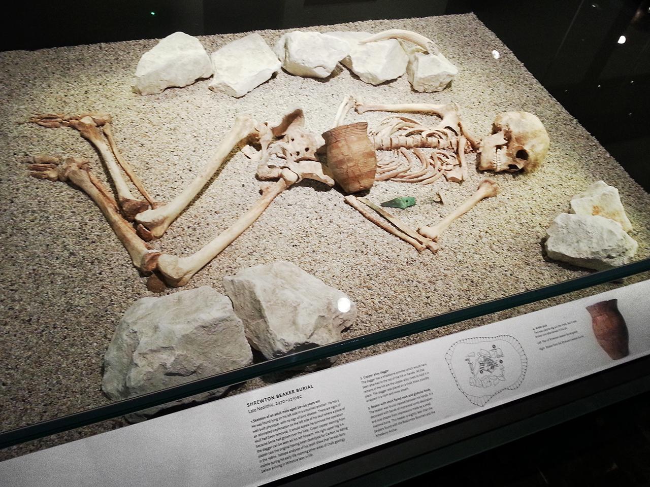 Skeleton exhibit