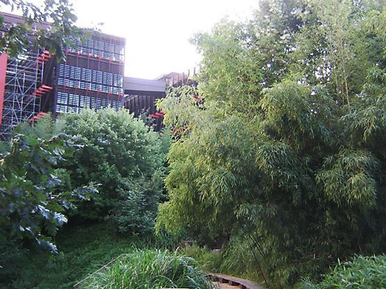 Trees and building