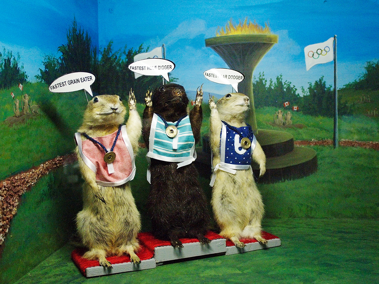 3 gophers on Olympic podium