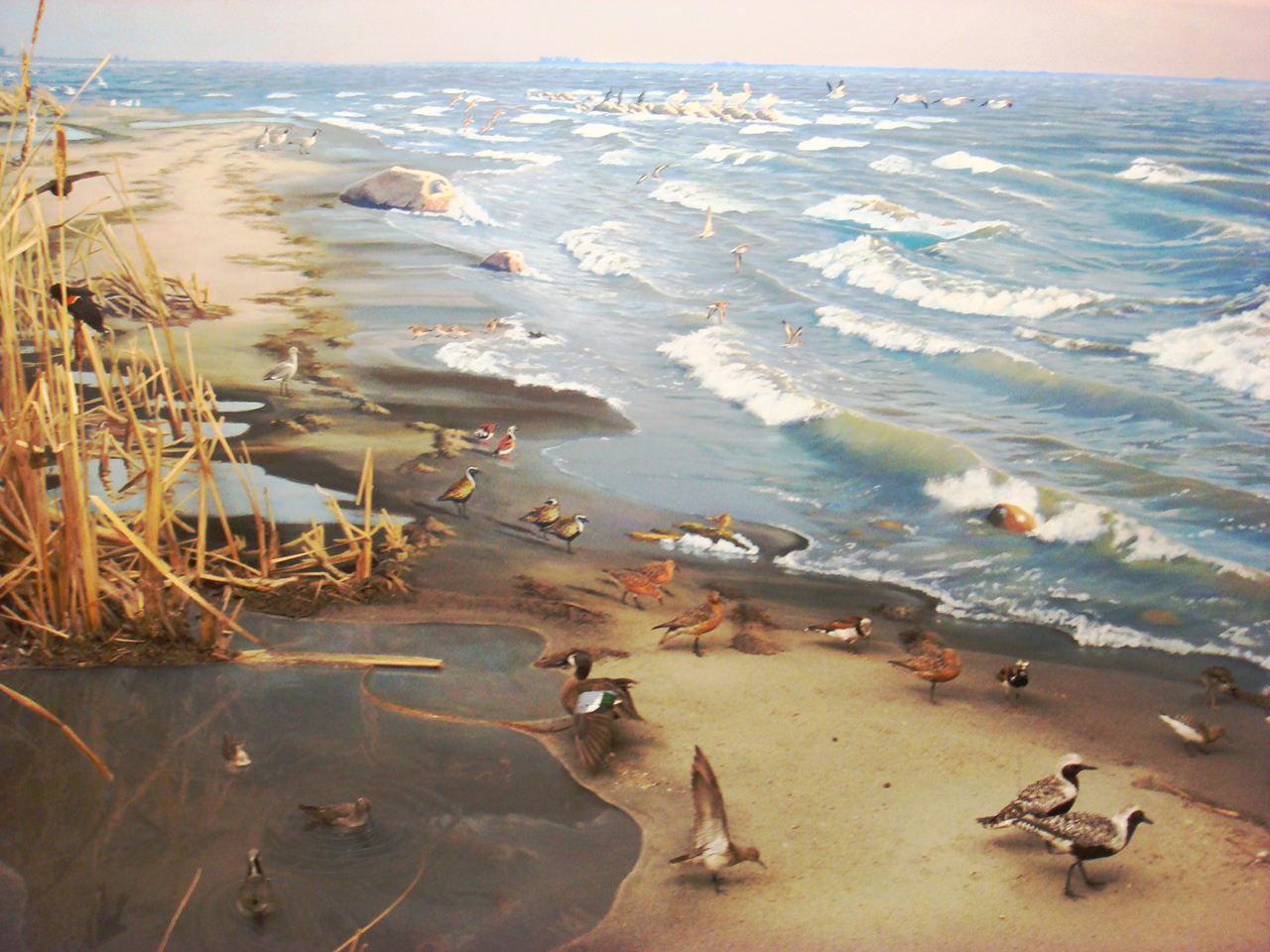 diorama of a Prairie lake with shore birds