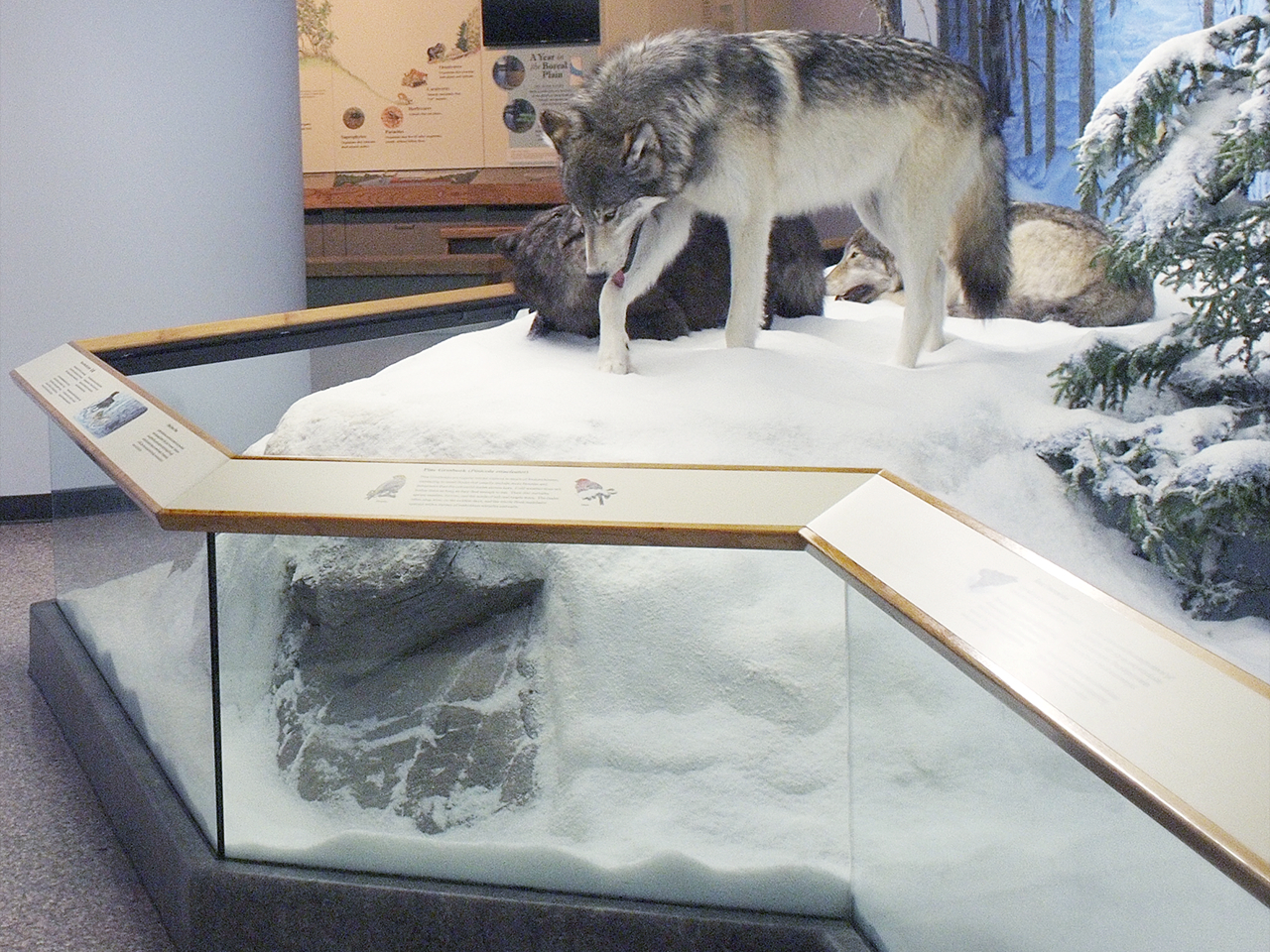 diorama and railings with a wolf