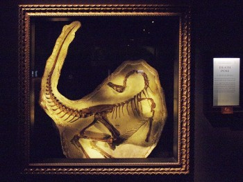 a small dinosaur skeleton in an ornate frame