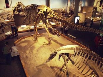 overhead view of dinosaur hall