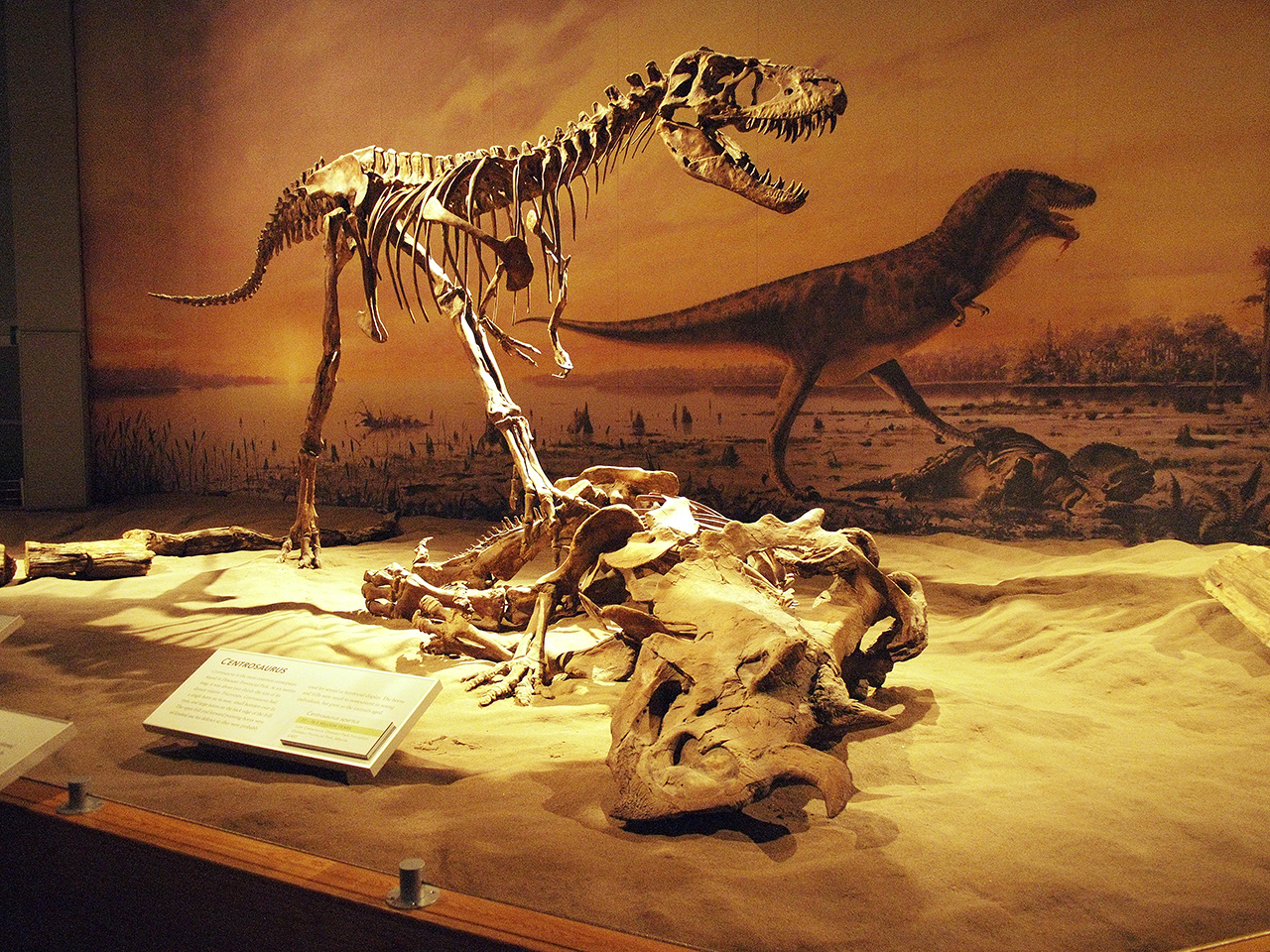 carnivorous dinosaur skeleton standing over its kill