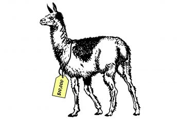 Illustration of a llama with a price tag of $10,000 around its neck.
