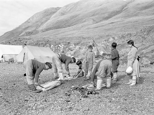 Black and white photo of group of Inuit hunters preparing seal carcasses.