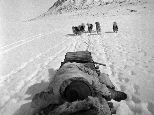 Black and white photo of dog team photographed from the sled.